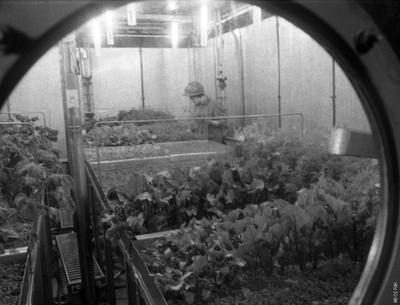 «Огород» в «БИОС-3»