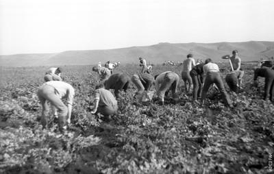 Сельхоз работы